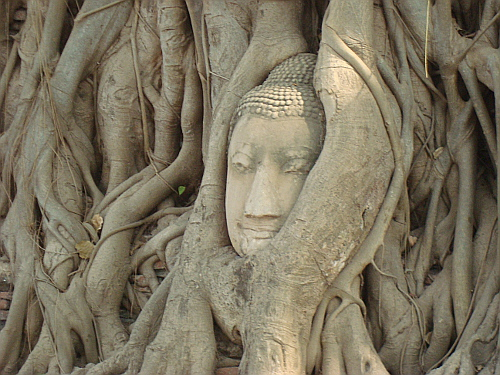 The Buddha Head at Wat Mahatat, Ayutthaya, Thailand