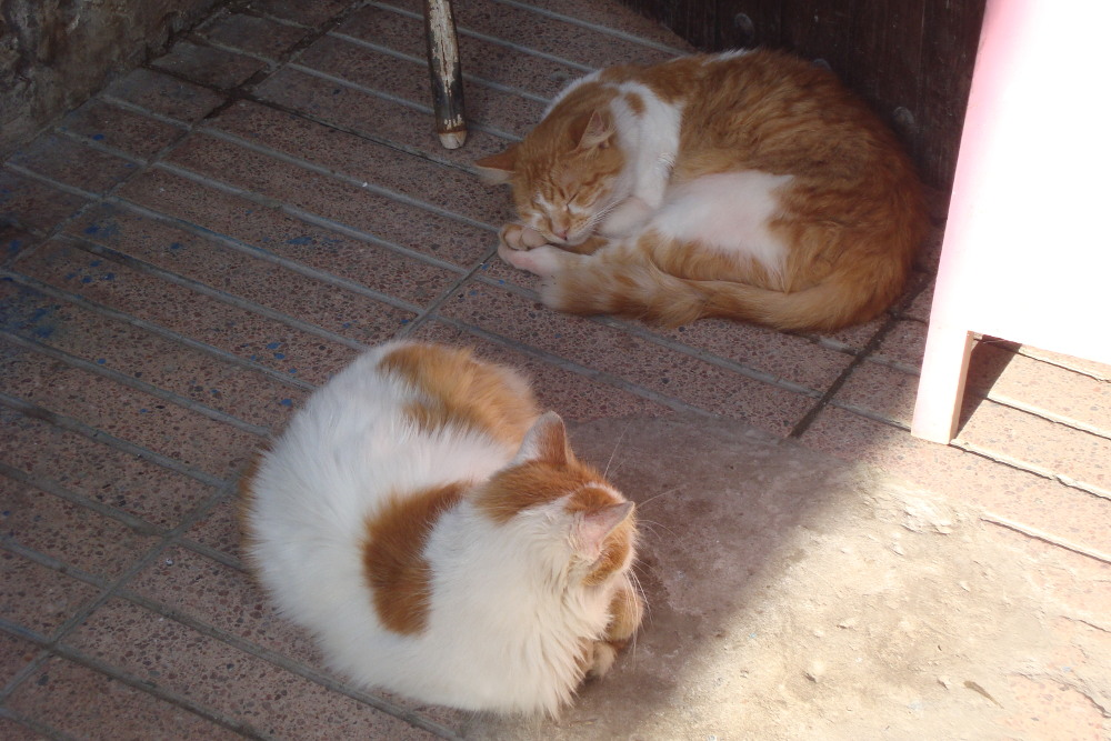 Two sleeping ginger cats